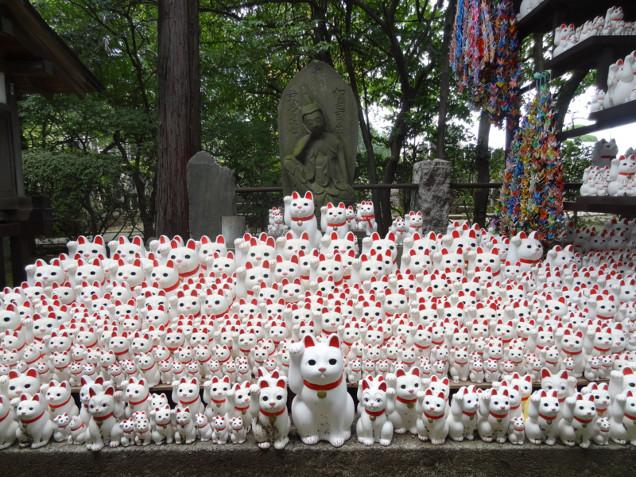 Nhật Bản: ngôi chùa riêng thờ con mèo 'siêu may mắn'