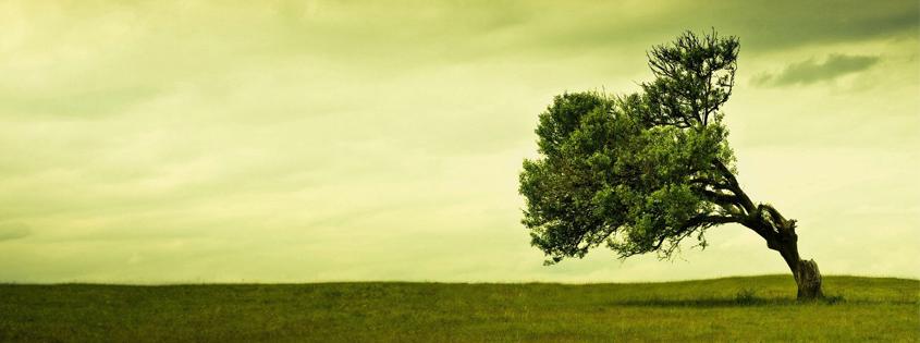 Thân cây mọc nghiêng