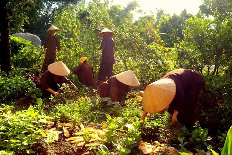 Tăng Ni sinh trường TCPH Hà Nội lao động sau cơn bão