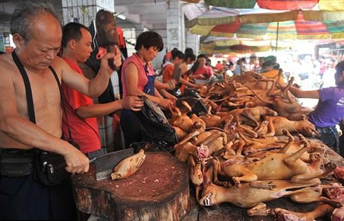 Vì sao Phật tử ăn chay và không được ăn thịt chó?