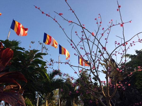 Chùa Hoa Khai mùa xuân Đinh dậu trên quê hương
