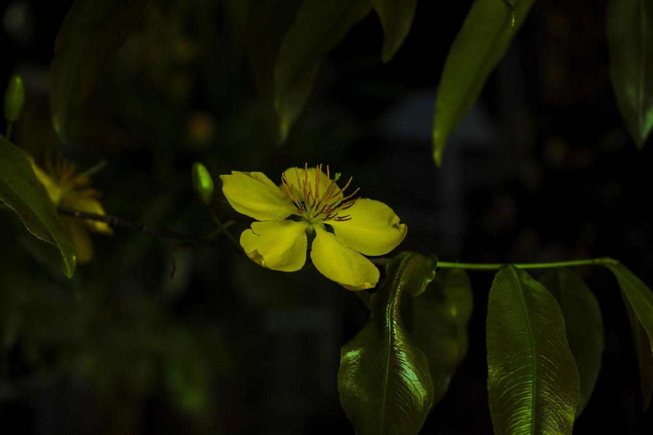 Chùa Thiên Quang mùa xuân về